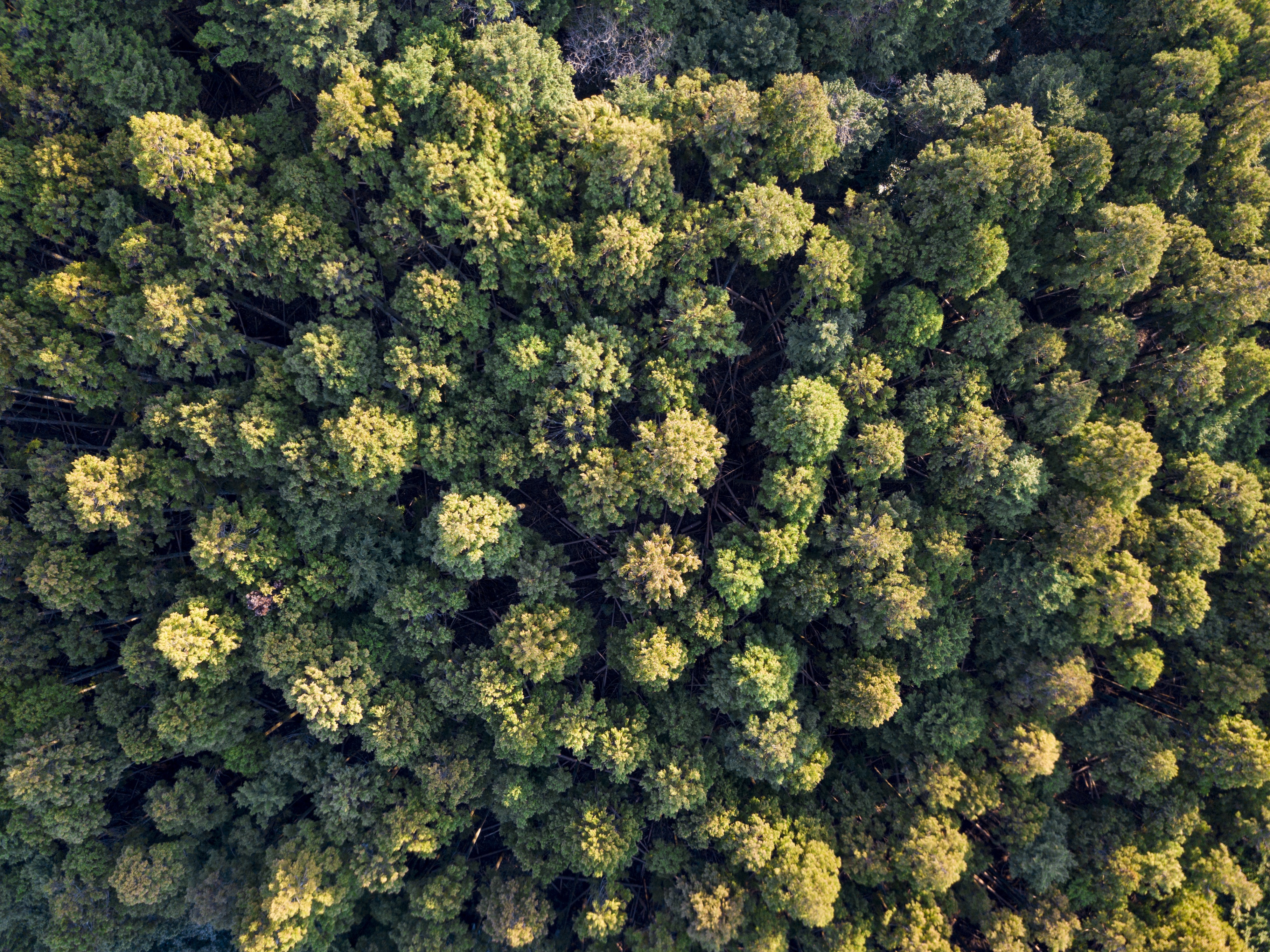bird's eye view of forest trees