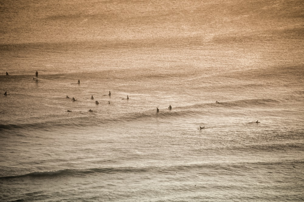 group of people swimming in the ocean