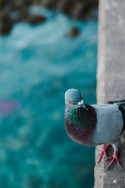 pigeon on gray concrete porch