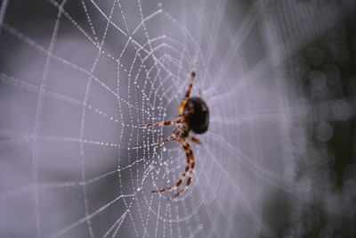 macro photography of black and brown spider on web spider zoom background