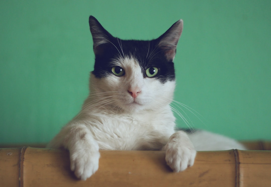 """Gipsy the Cat was sitting on a bookshelf one afternoon and just stared right at me, kinda saying: """"Will you take a picture already?"""""""