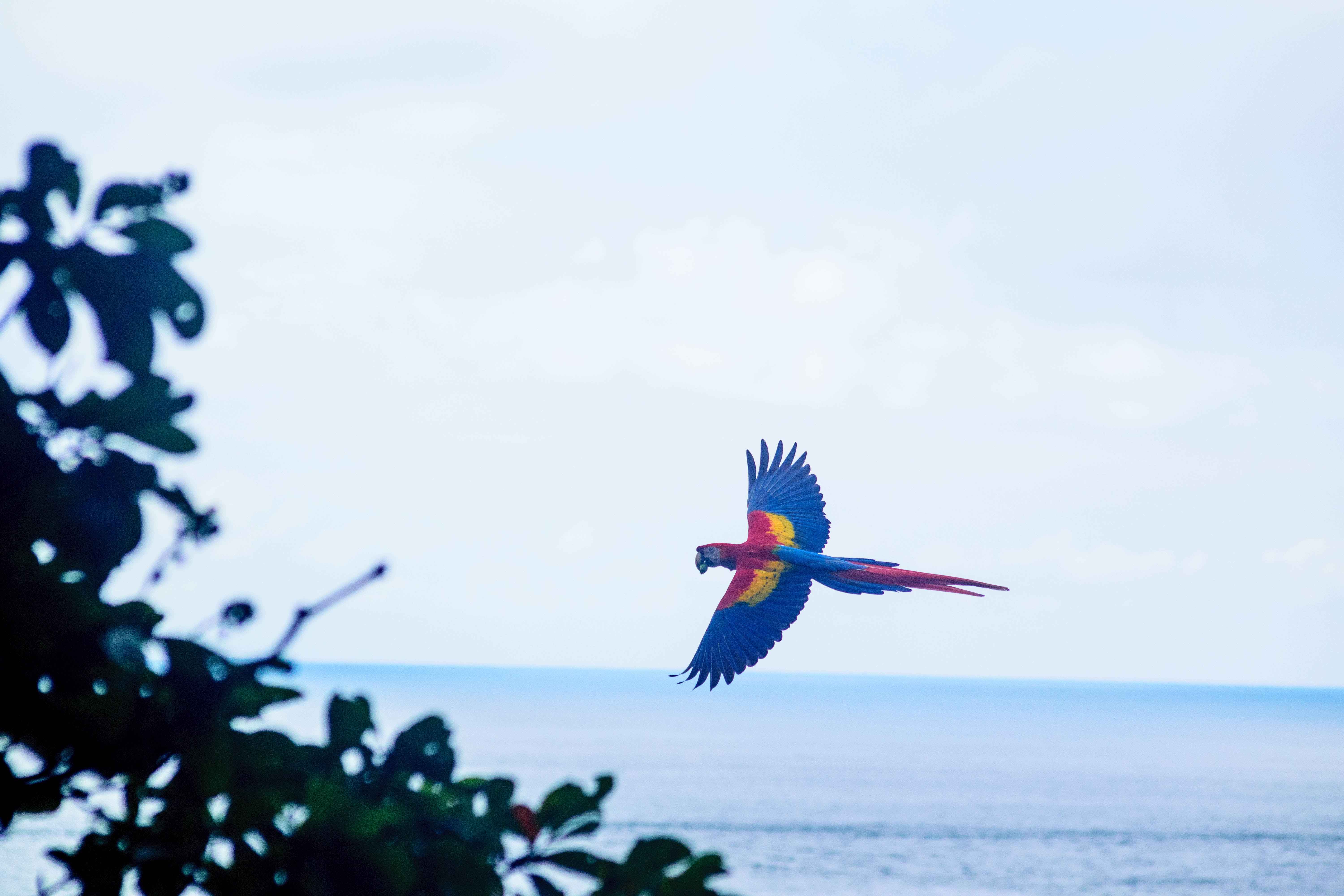 multicolored parrot bird flying near body of water
