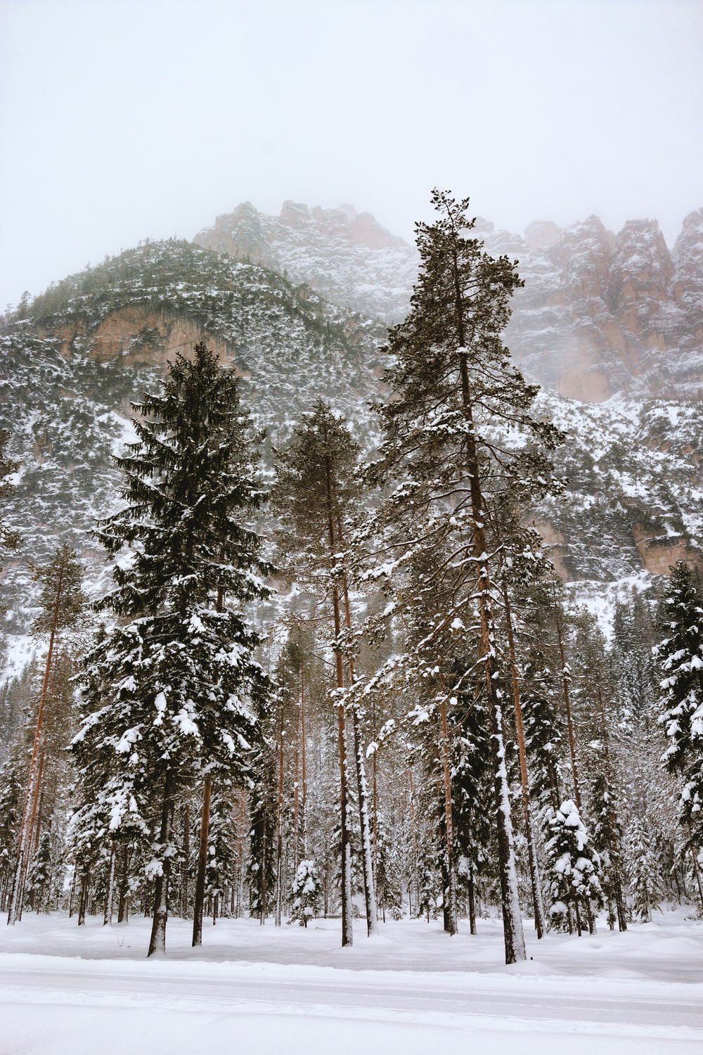 low-angle photography of snow covered trees