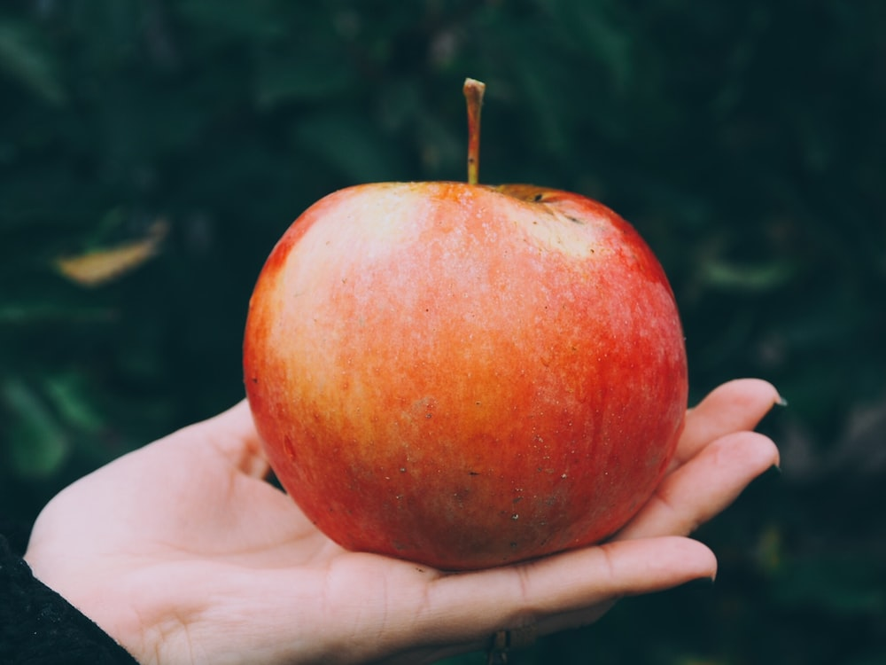 red apple in person's palm