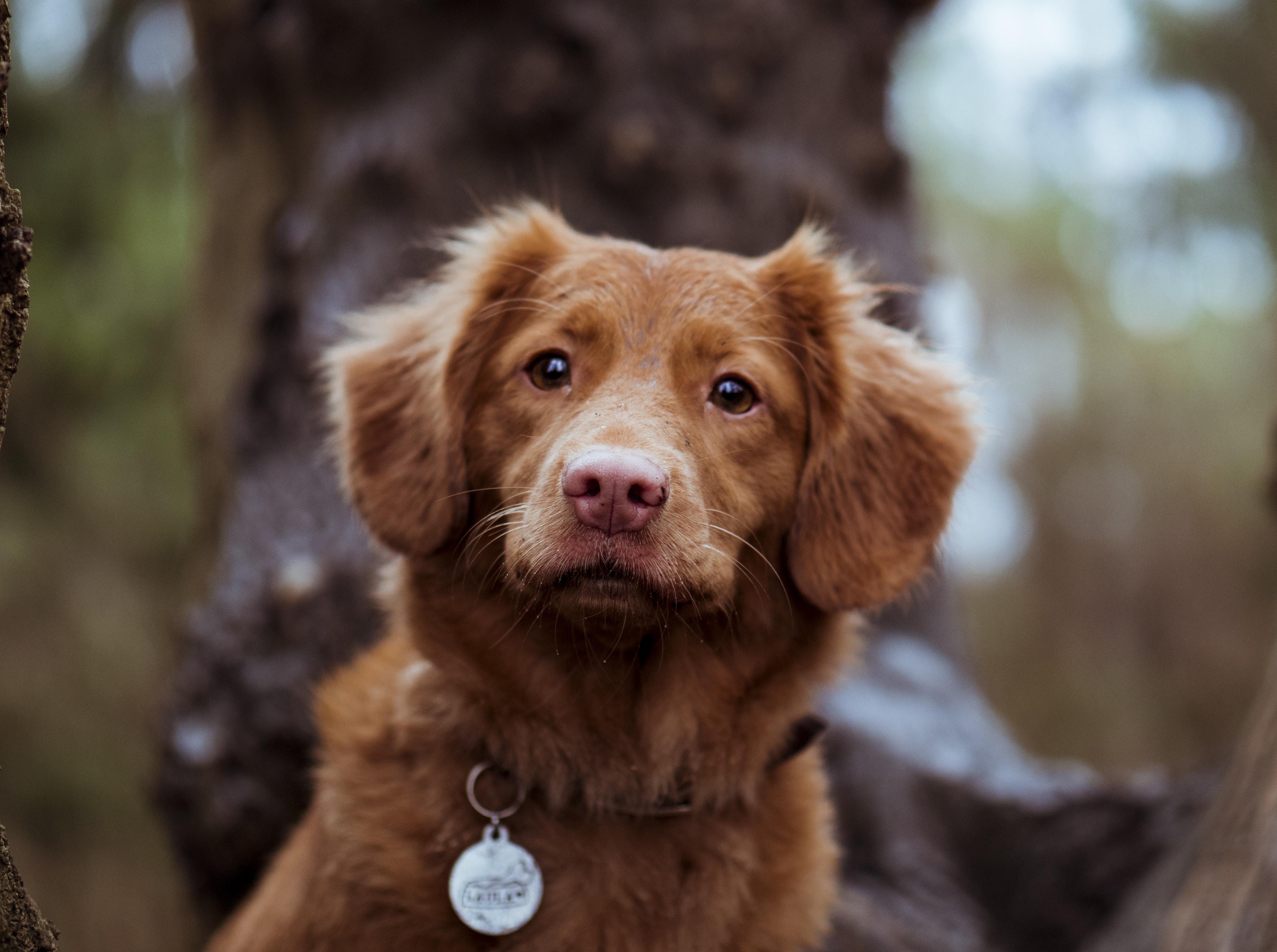 tilt shift lens photography of brown dog