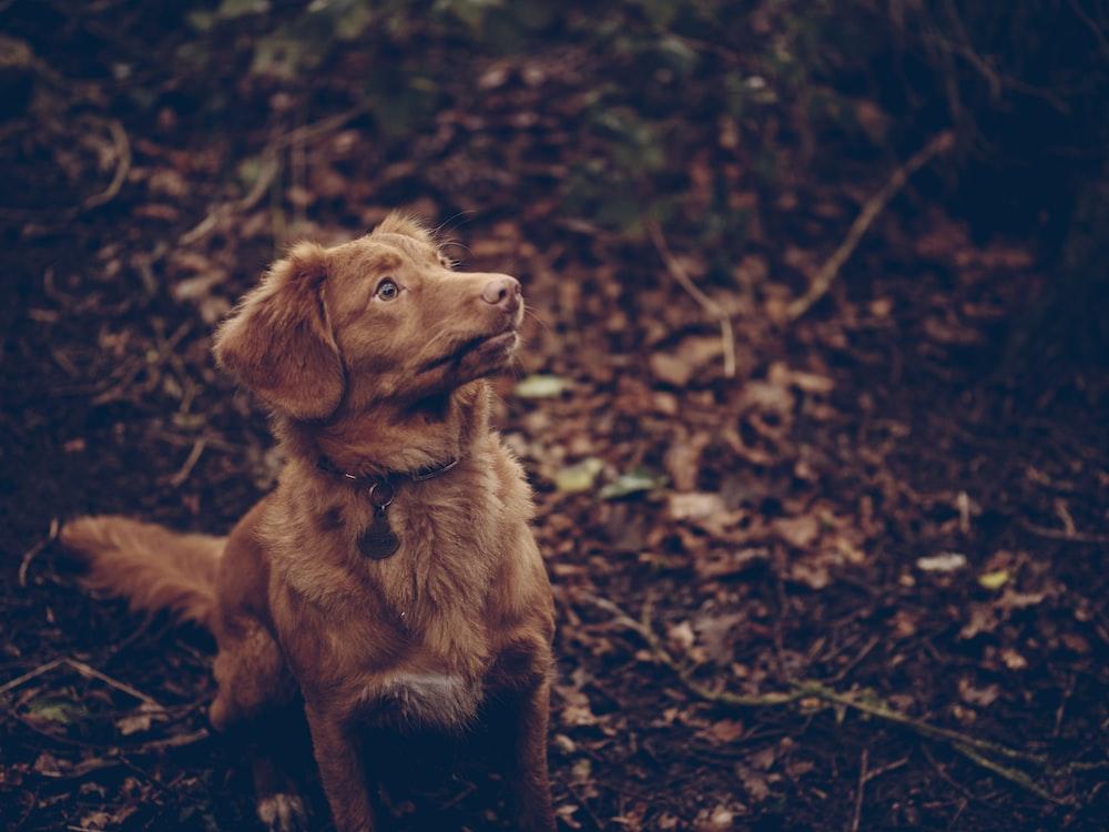 brown dog sitting on black surface