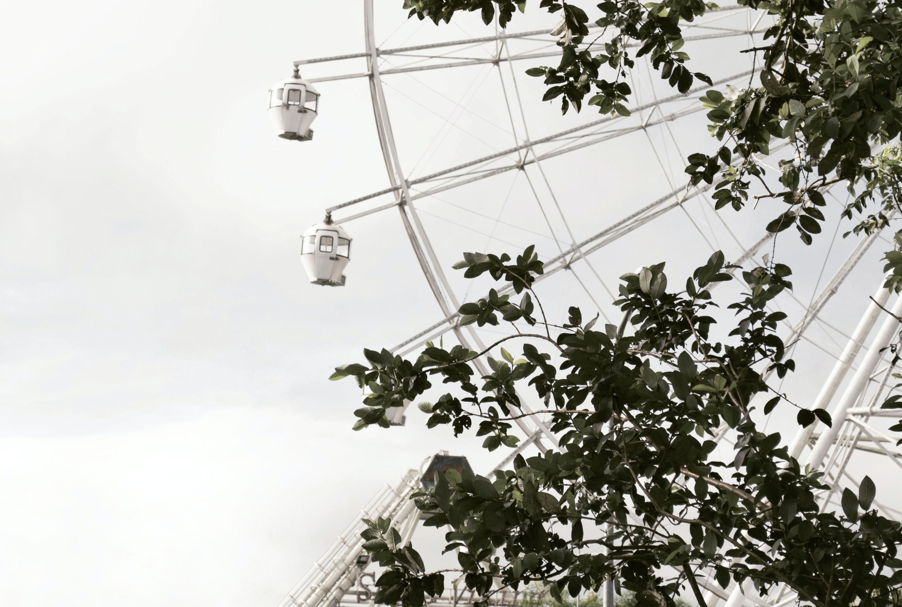 Ferris wheel can be seen through green leafed tree
