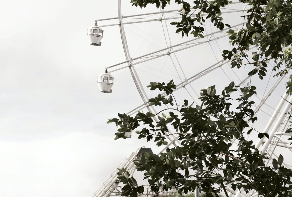 Ferris wheel can be seen through green leafed tree