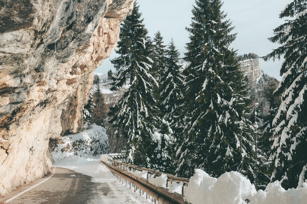 mountain pass beside snow-covered pine trees during daytime