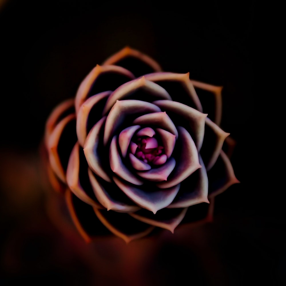 shallow focus photo of flower