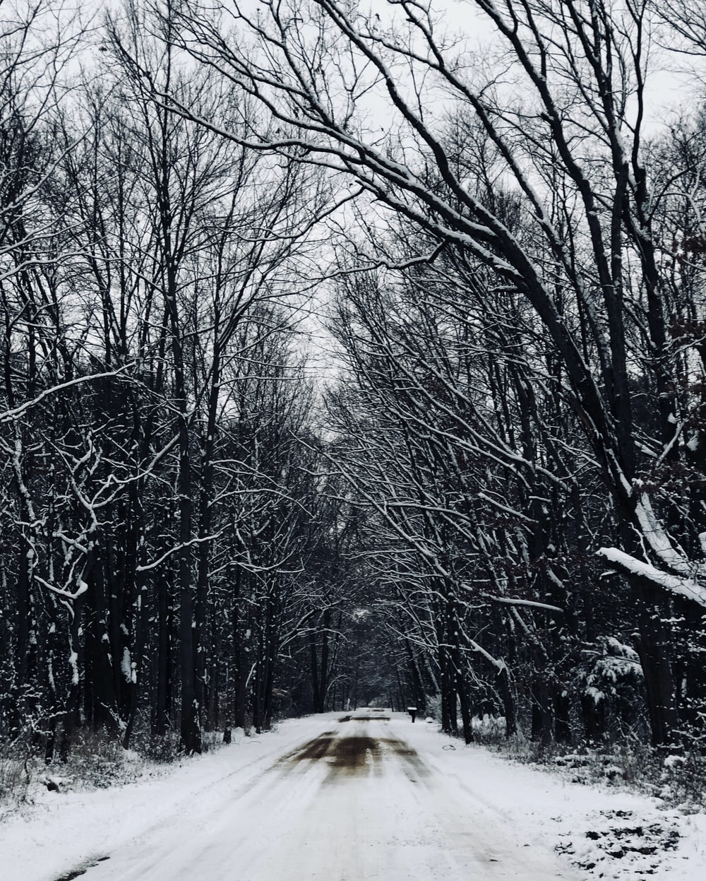 snow covered road in between on trees at daytime