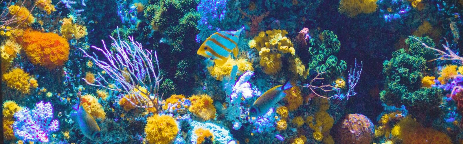 Color Palettes 49 Best Free Color Macro Flower And Petal Photos