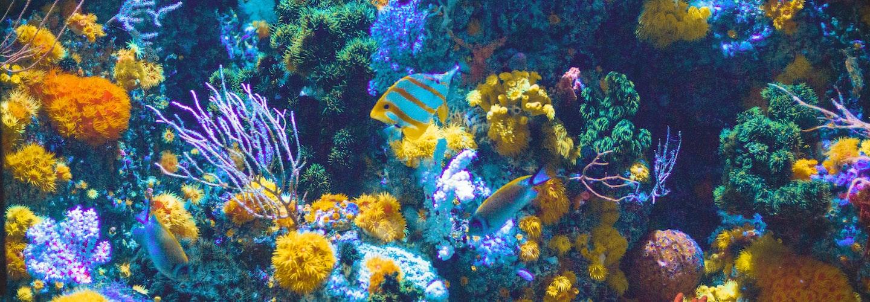 SeaGarden Aquarium Choices