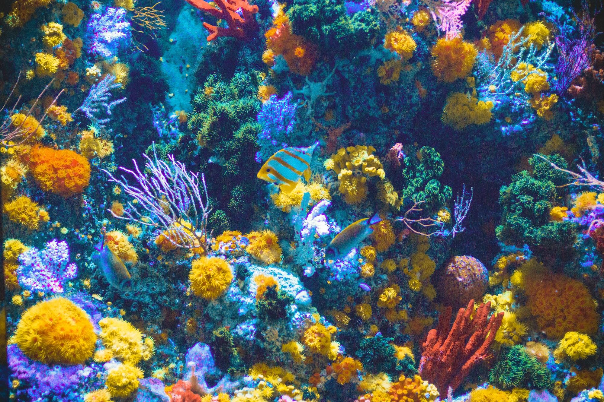Bělení korálů může být i barevné, potvrdila nová studie