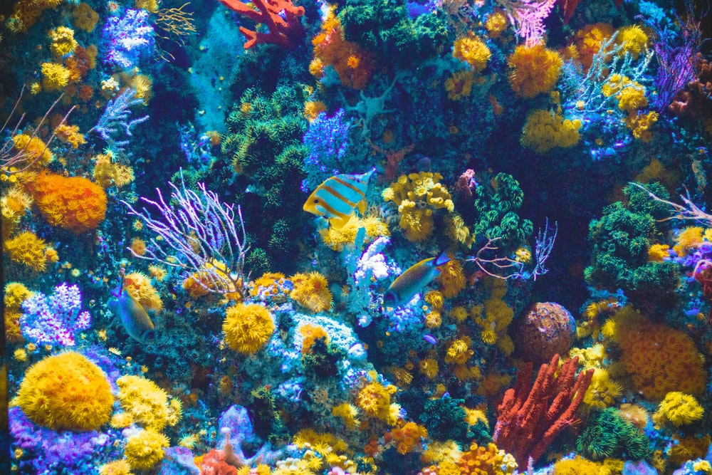 900 Aquarium Background Images Download Hd Backgrounds On