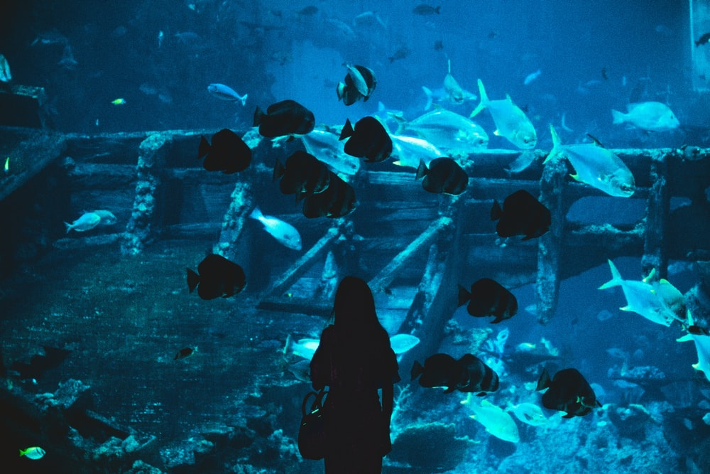 silhouette of woman near aquarium
