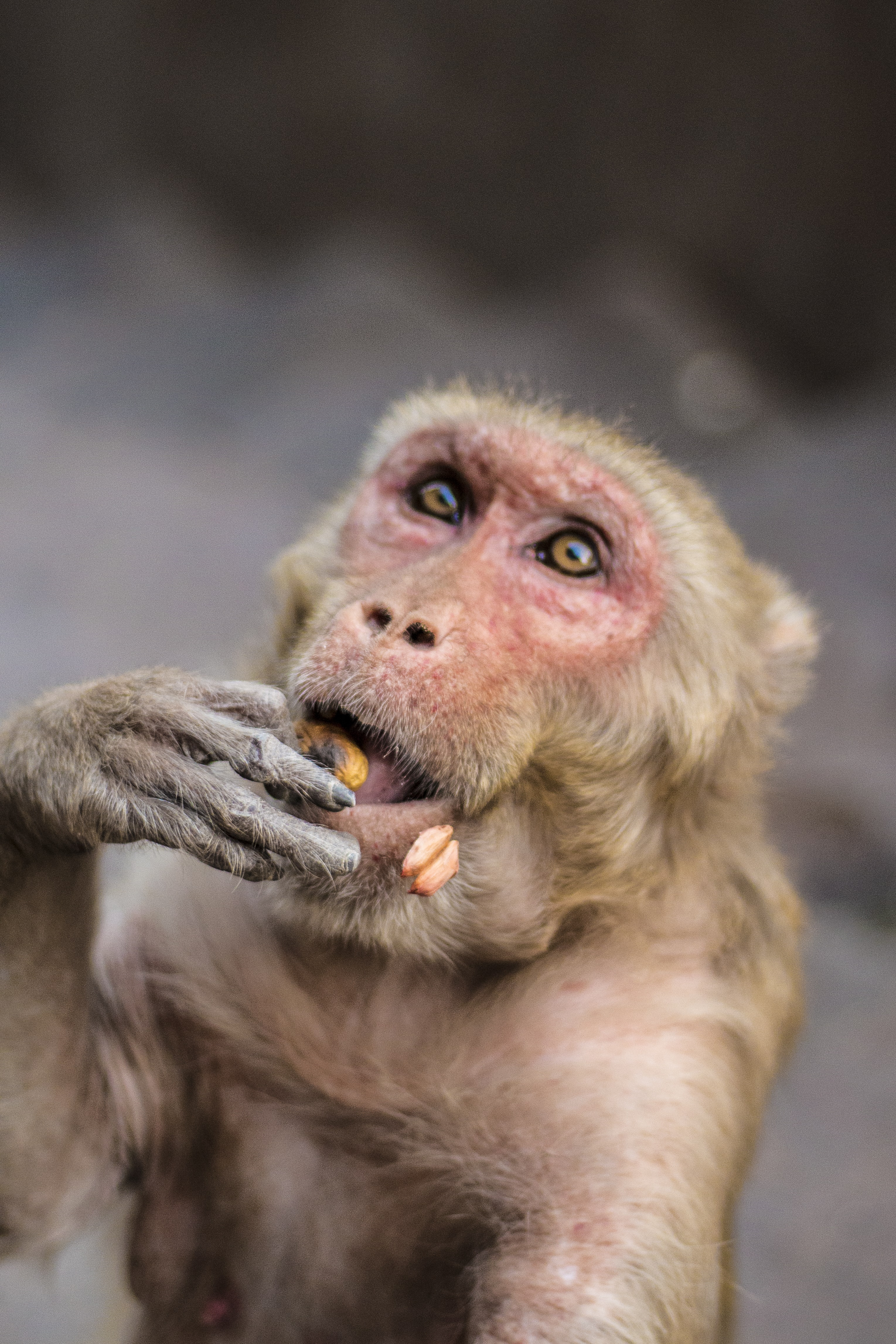 brown monkey in shallow focus photography