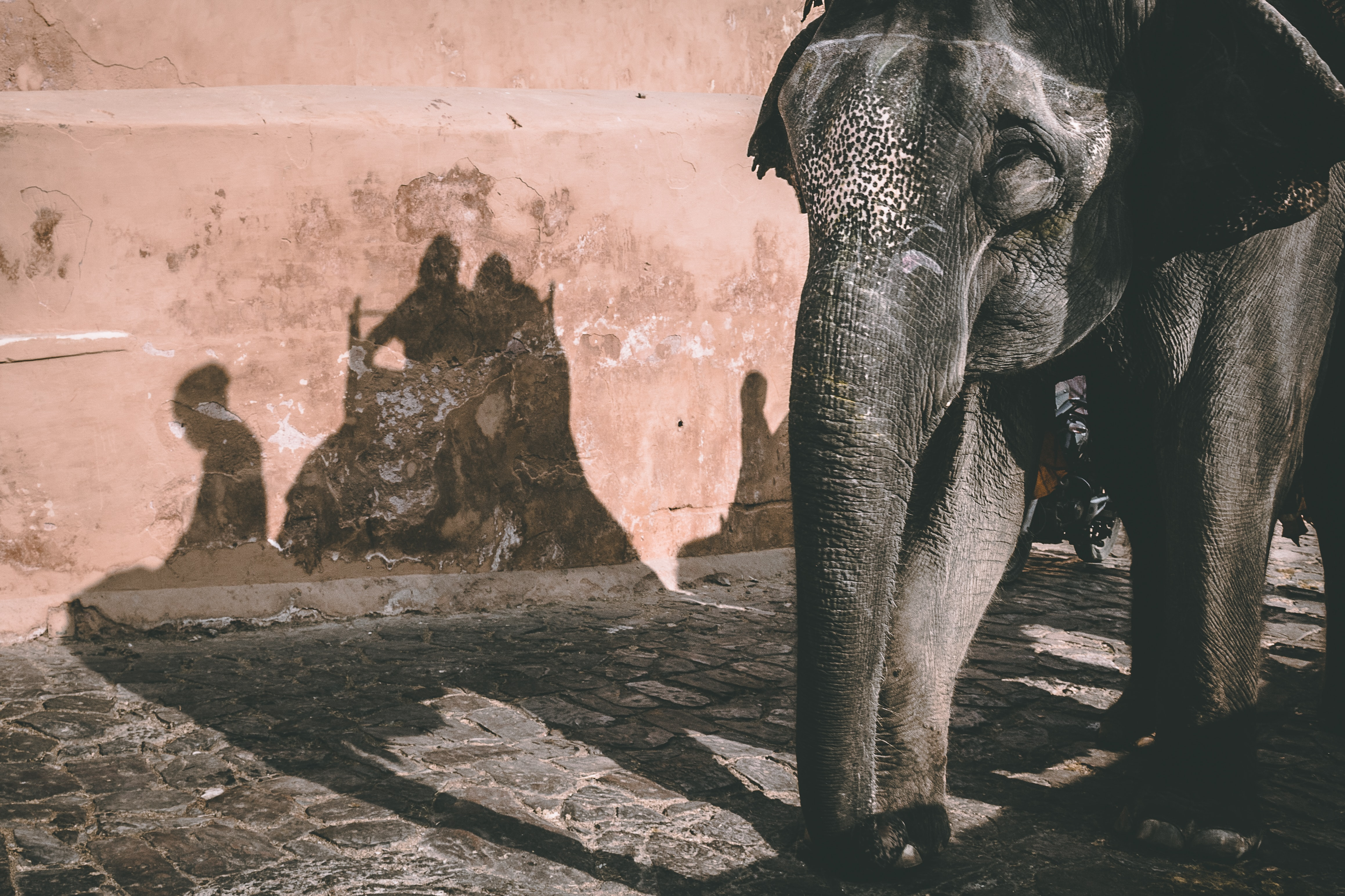gray elephant standing beside brown wall