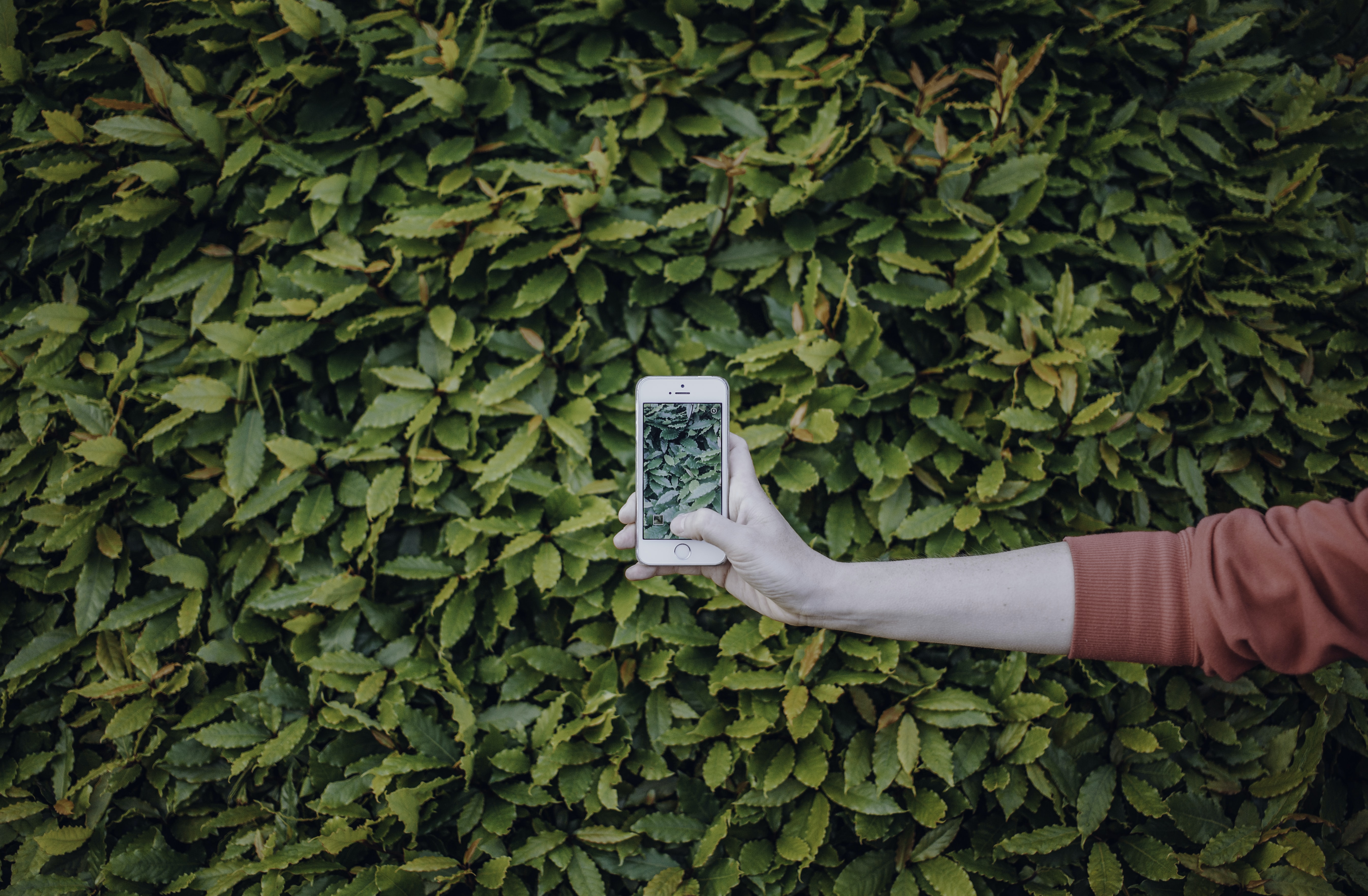 person taking photo of shrub