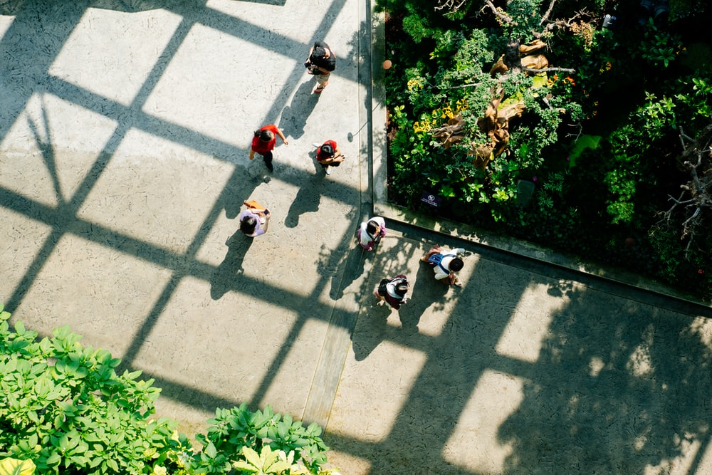 people standing near green plants