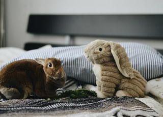 two rabbit plush toys on top of bed