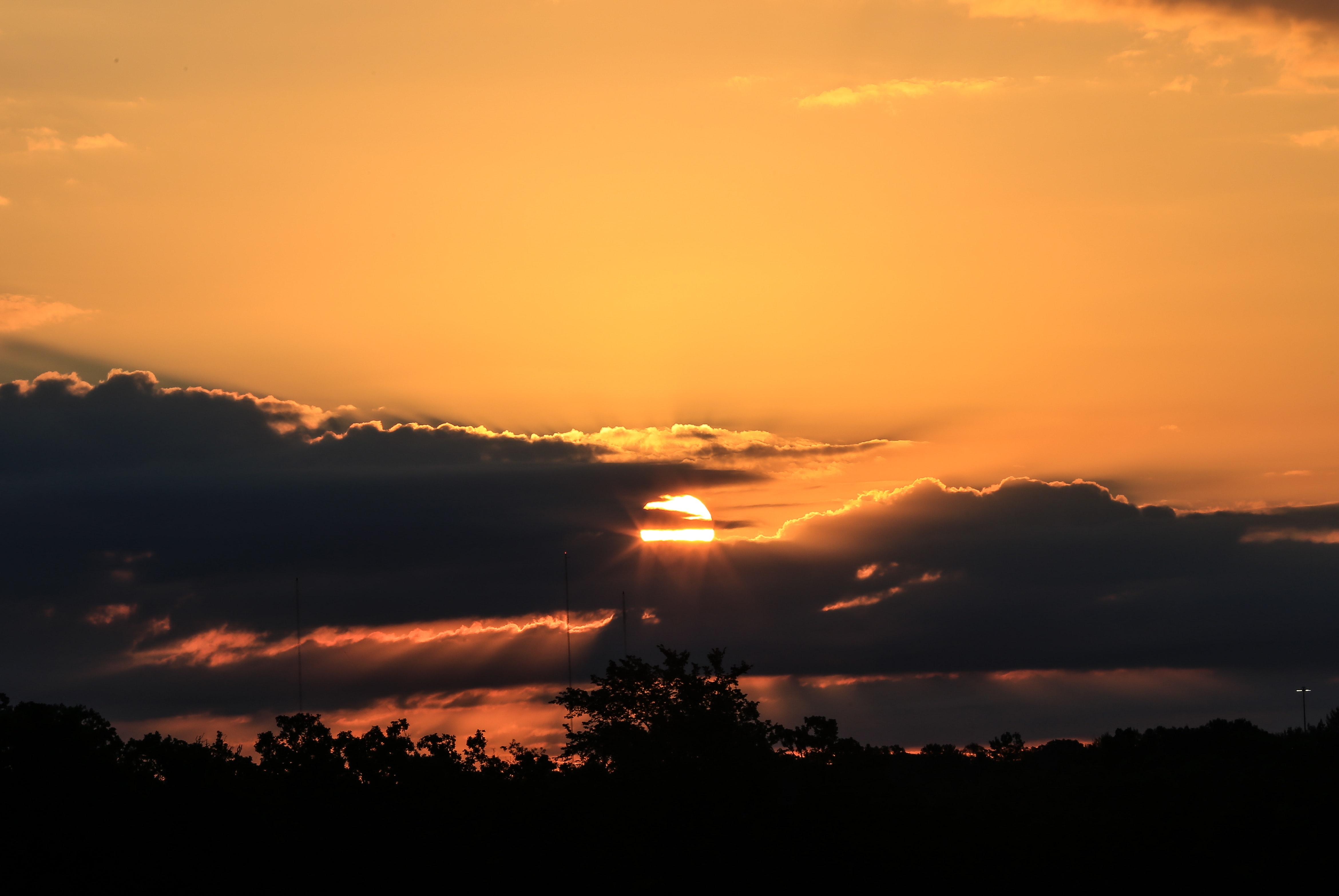 silhouette of trees under orange sky during sunset