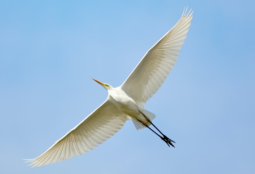 flying white bird