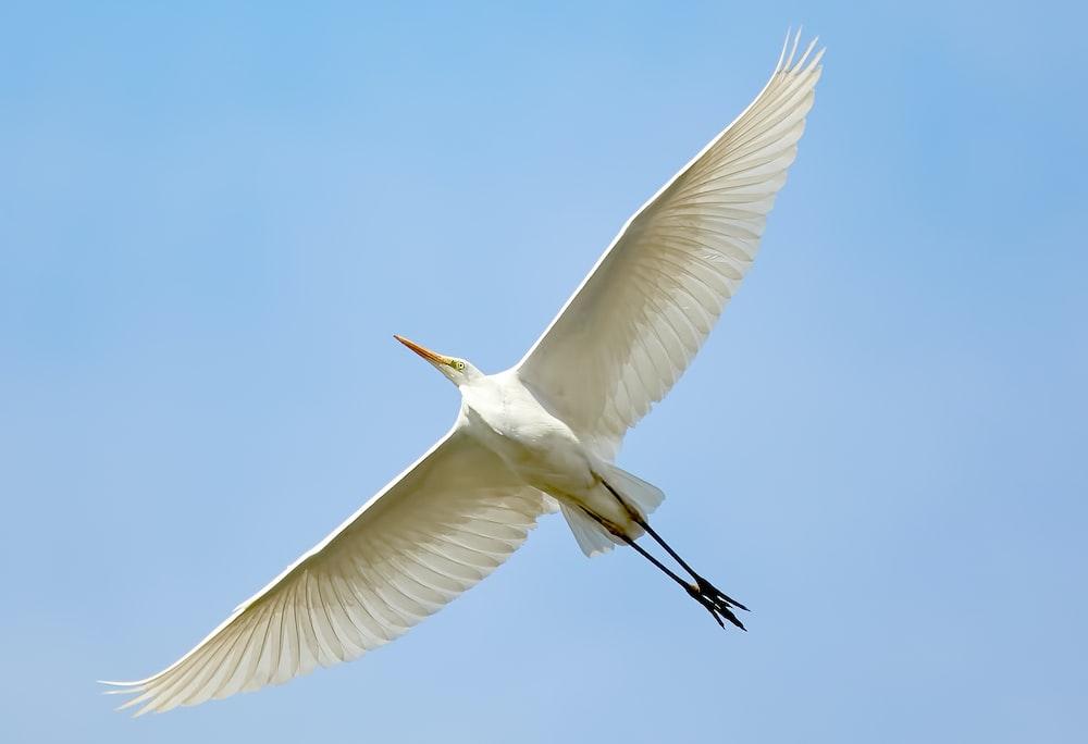 flying white bird