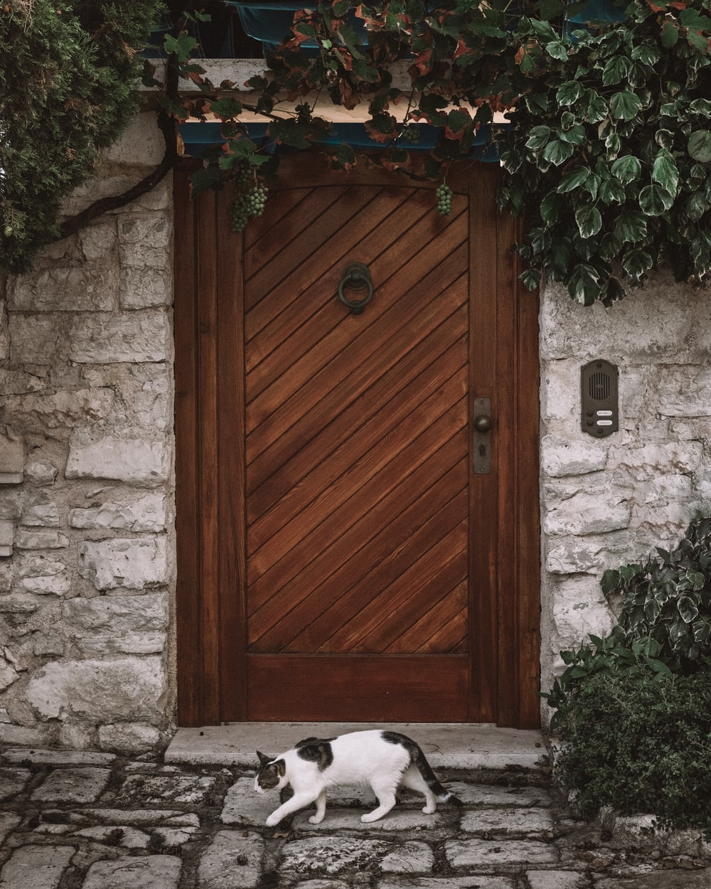 white and black cat walking next to brown wooden door
