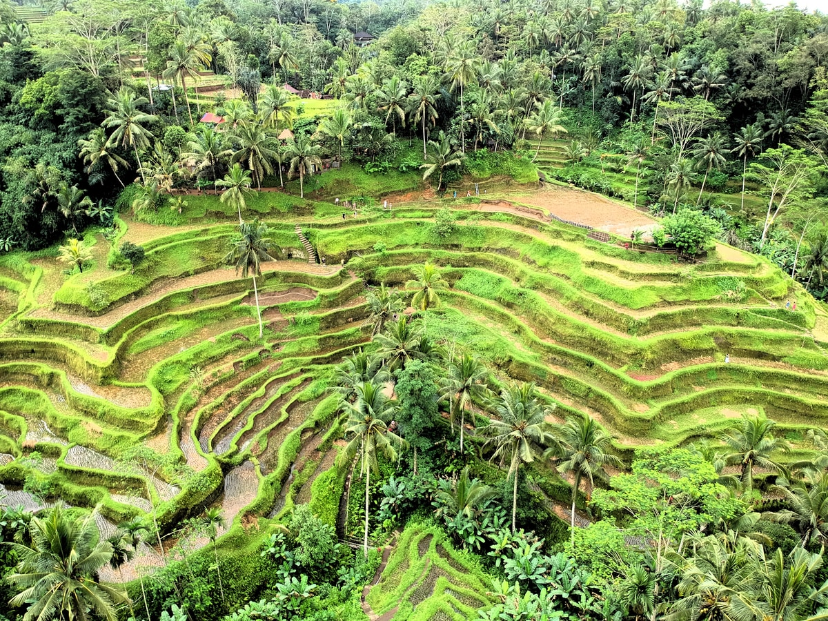 Tegallalang Rice Terrace in Ubud. Best Places to Visit in Bali