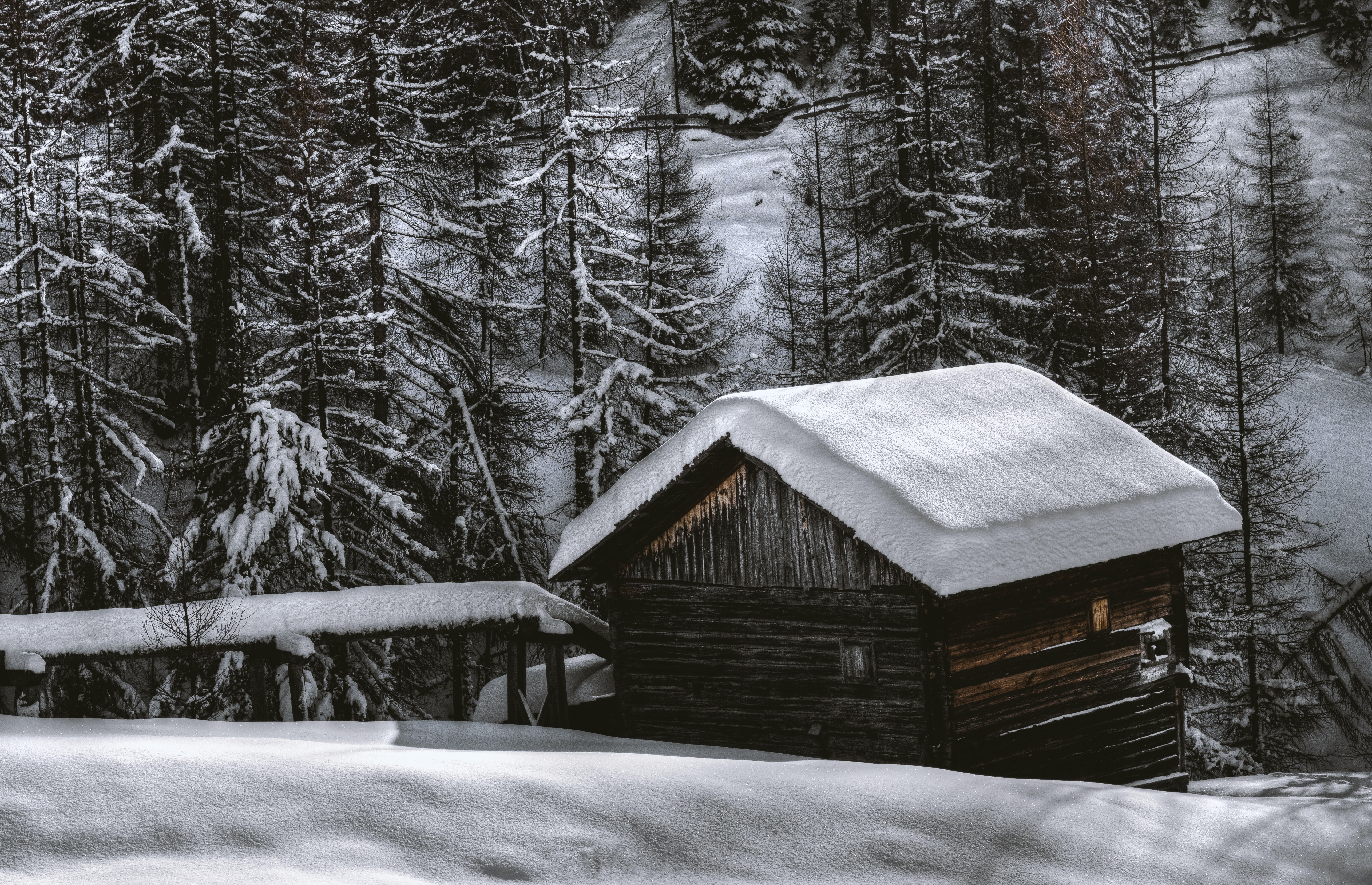 grayscale photography of house near pine trees