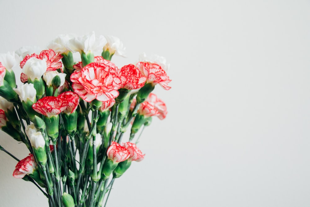 White carnation pictures hd download free images on unsplash bouquet of red and white flowers mightylinksfo