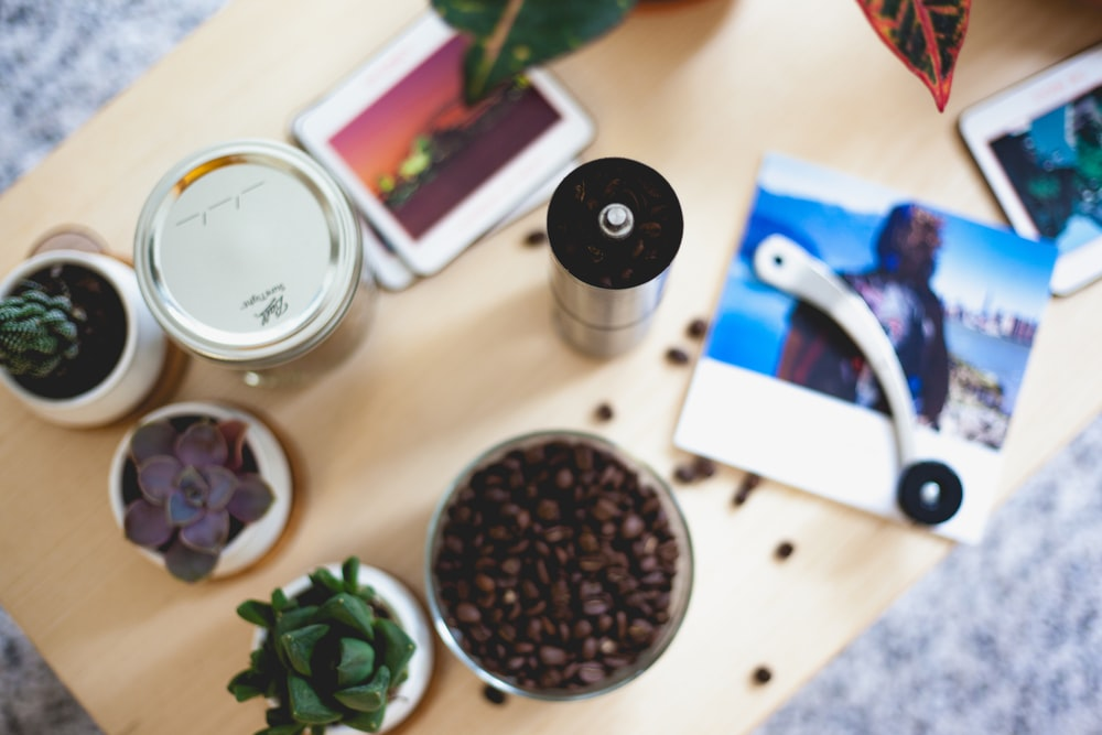 flatlay photography of green succulent plants