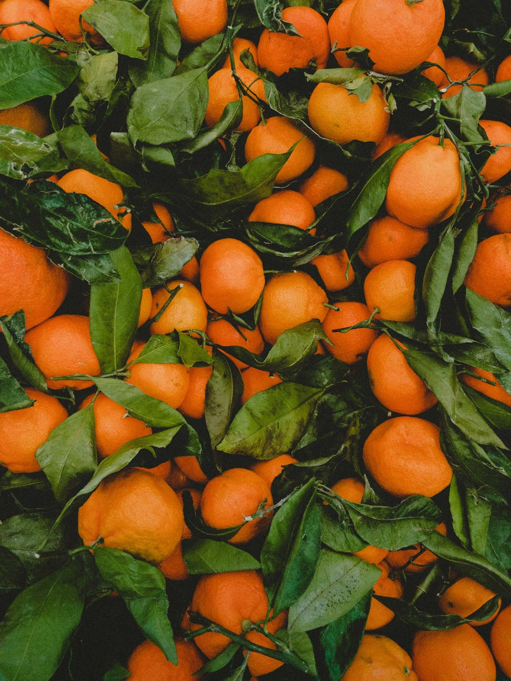 bunch of orange fruits