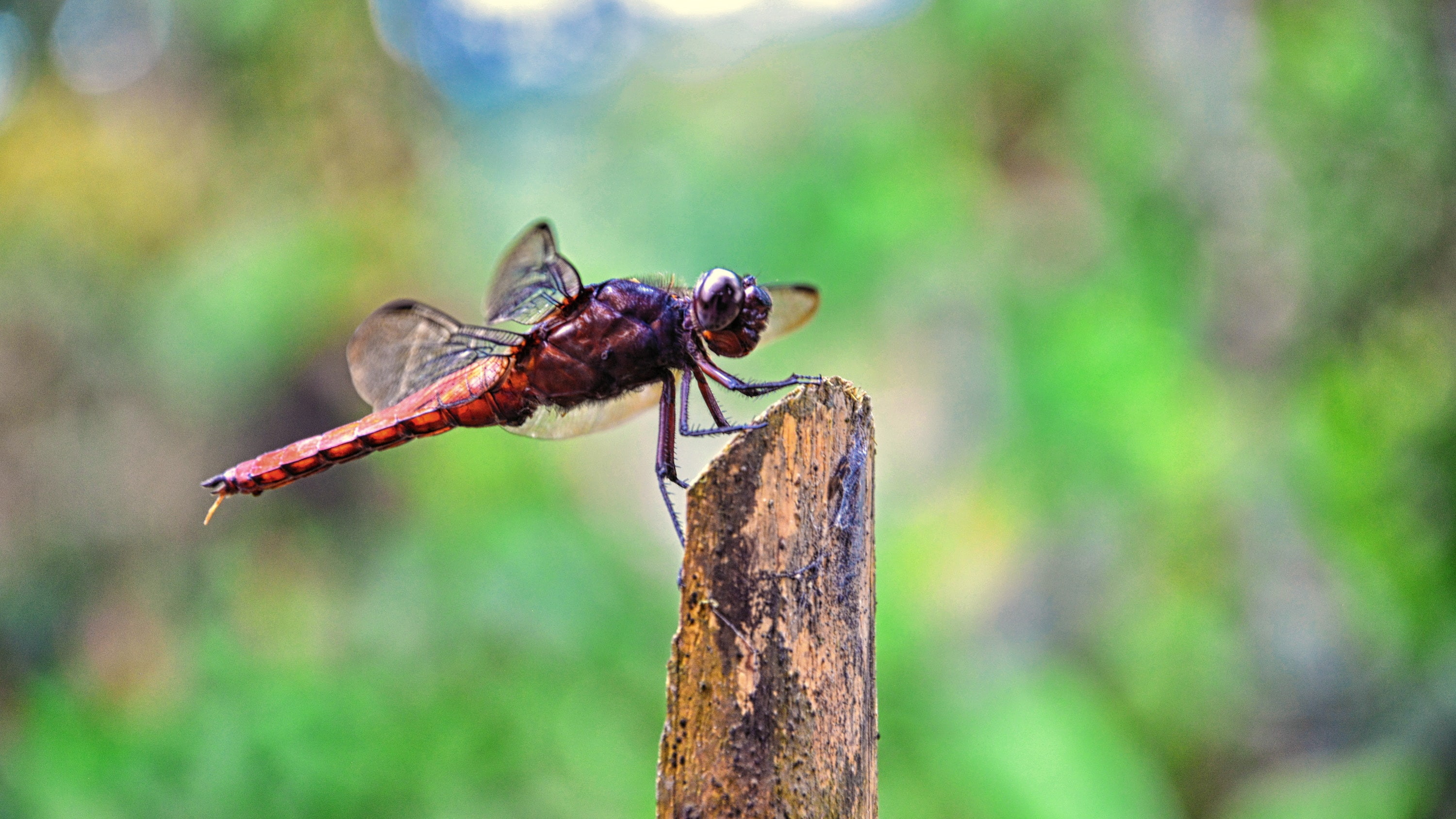 red and black dragonfly on brown tree trunk