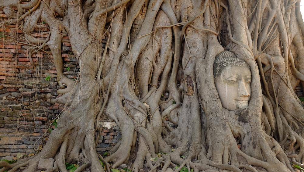 photo of Gautama Buddha covered with trees