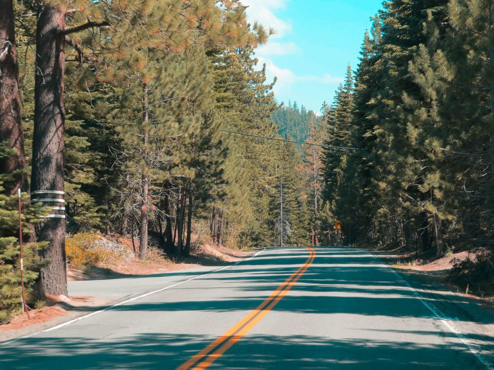 road with pine trees during daytime