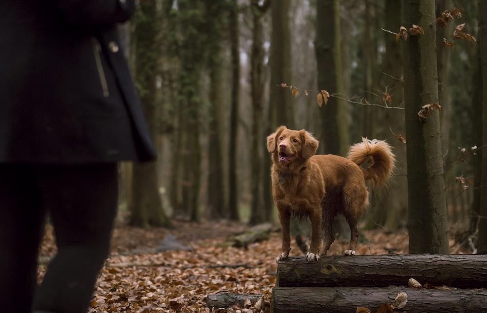 brown dog on tree log