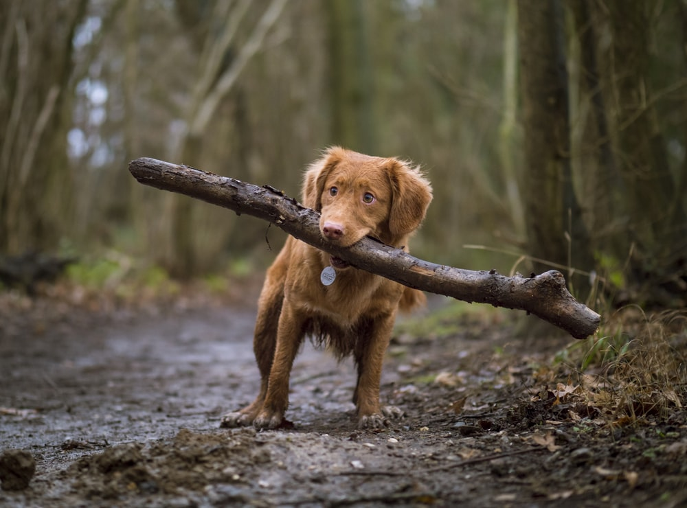 dog biting brown wood on road