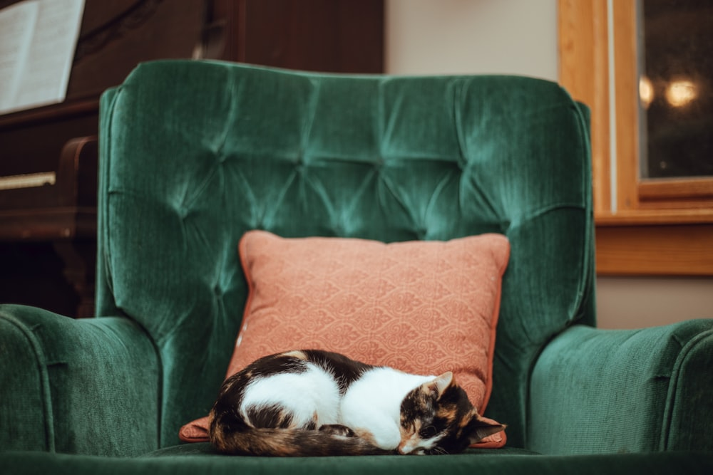 calico cat on top of green tufted armchair