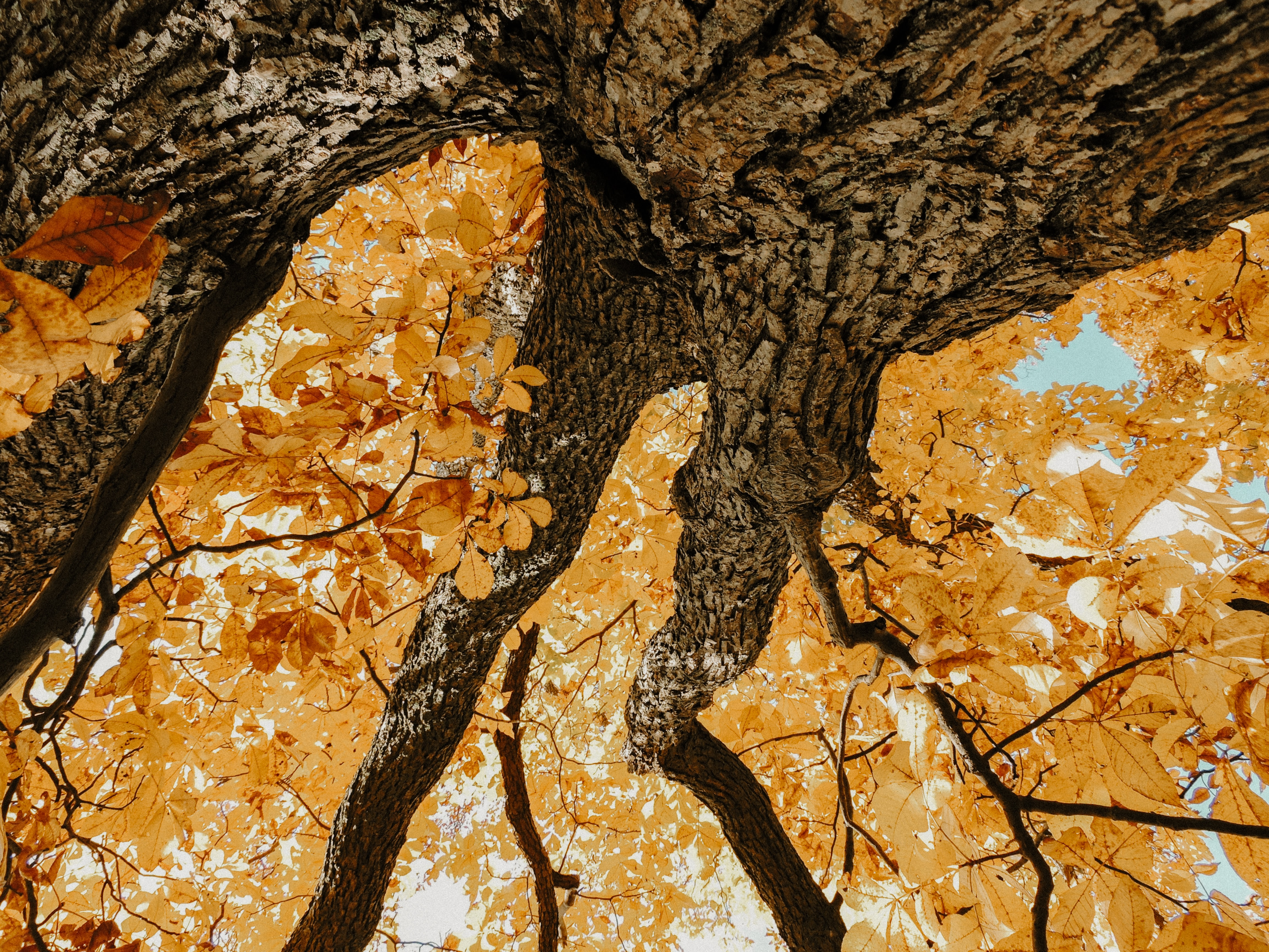 landscape photography of brown tree