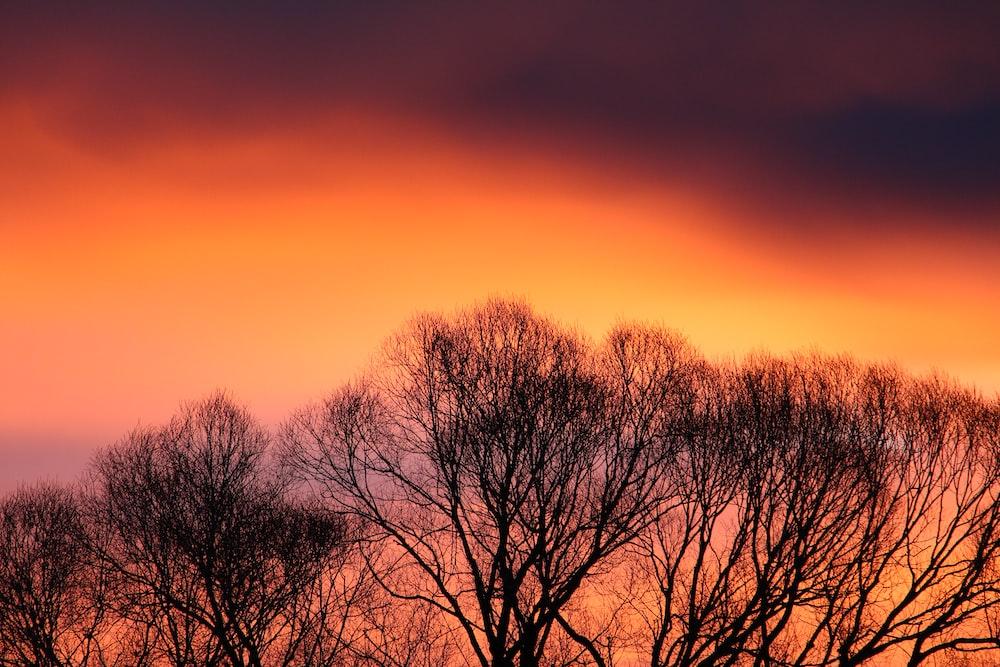 bare trees under orange sky