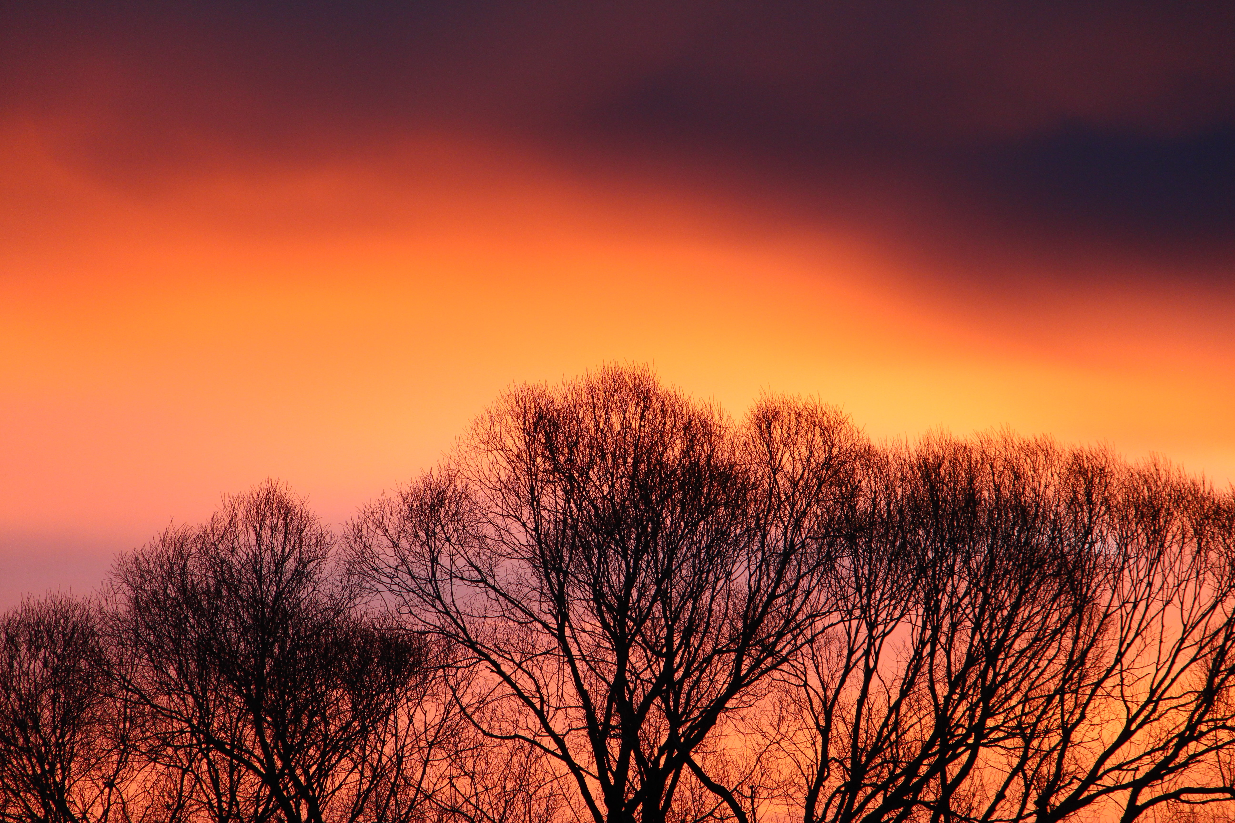 bare trees under orange sky