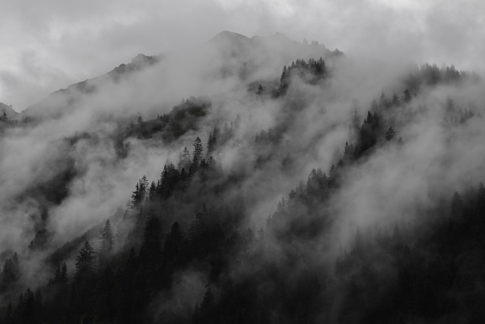 landscape photography of foggy hill