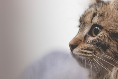 selective focus photo of brown tabby cat cat zoom background