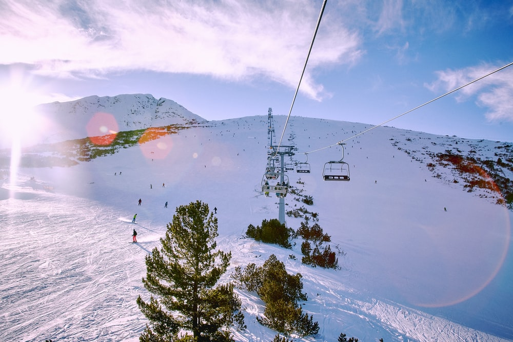 people on snow capped filled with trees during daytime