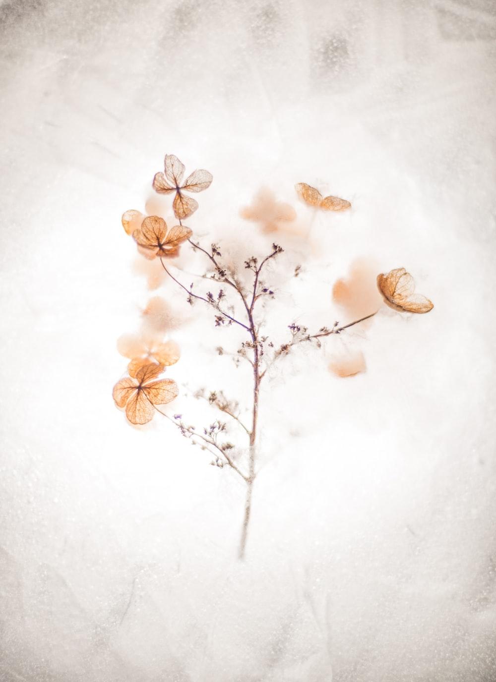 brown floral painting