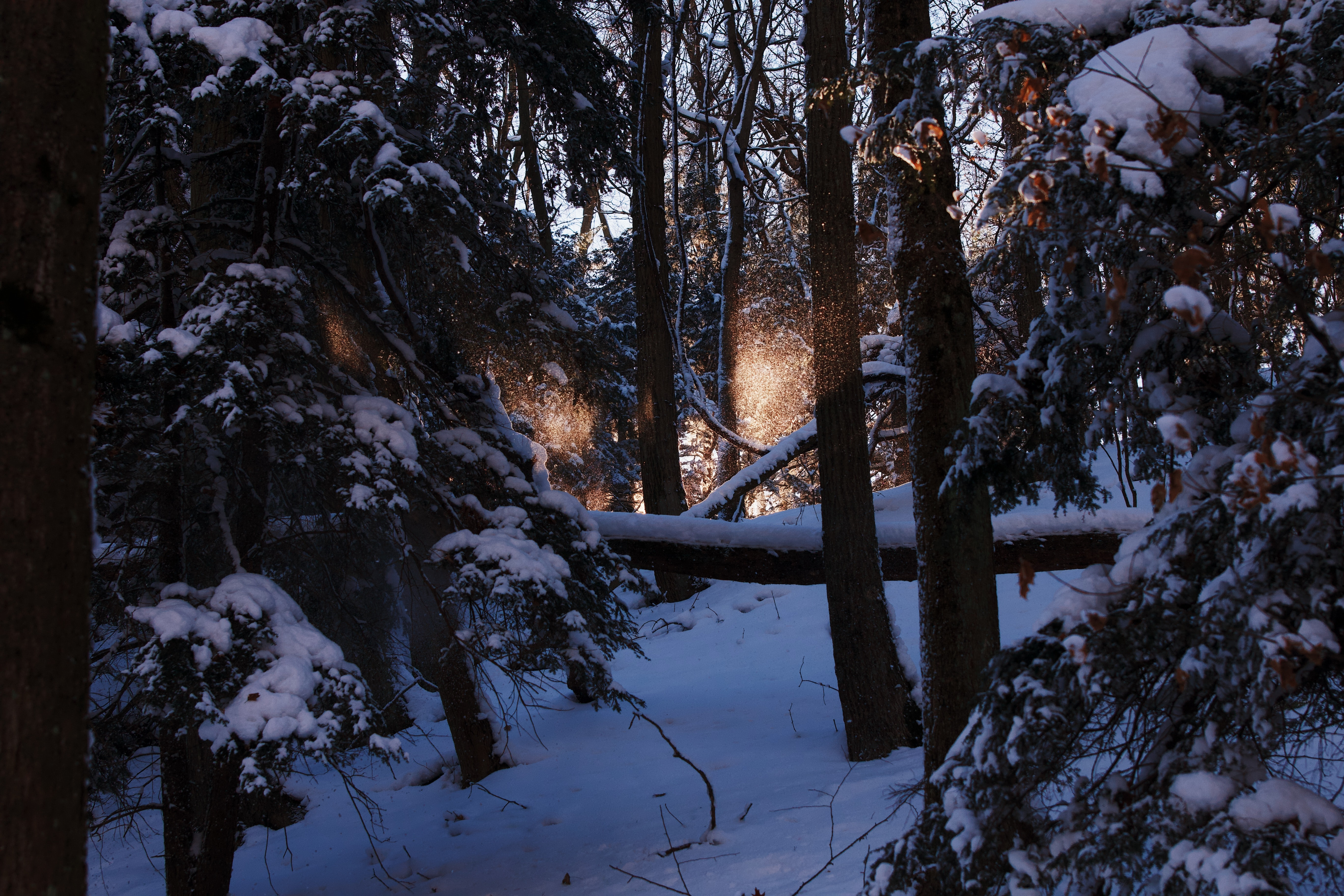 landscape photography of trees covered by snow