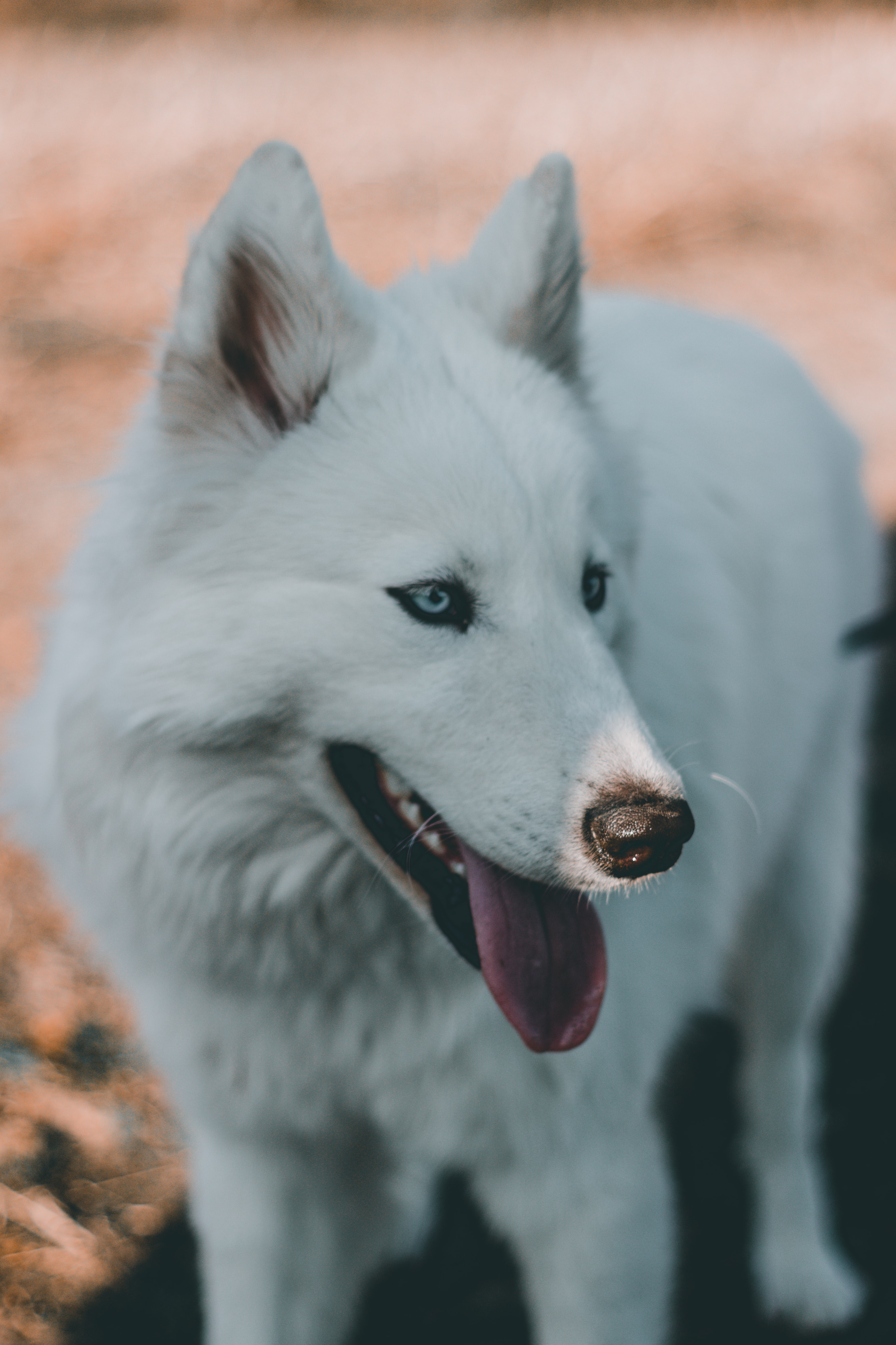 closeup photo of white dog