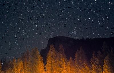 green pine tree under starry night sky